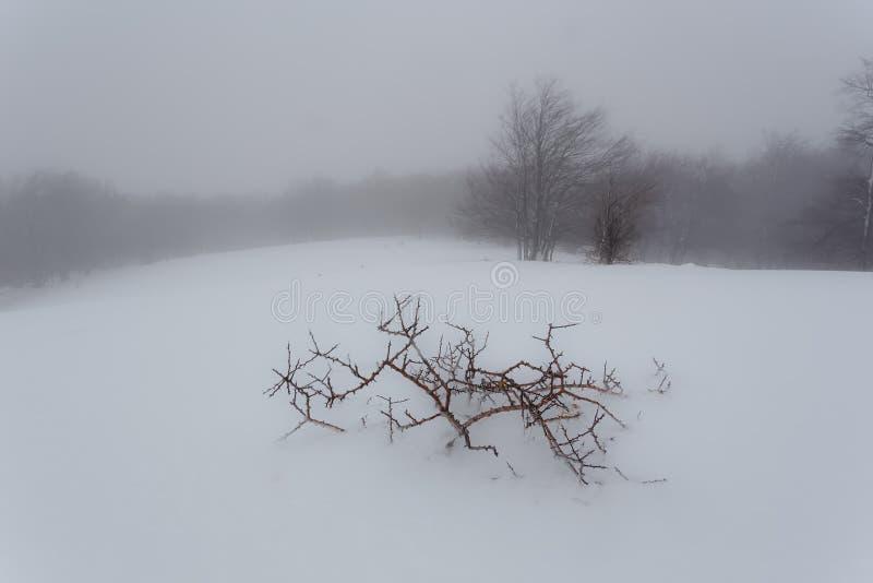Eerste sneeuwonweer van het jaar royalty-vrije stock afbeelding