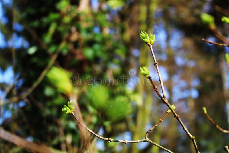 Eerste tekens van de lenteachtergrond stock fotografie
