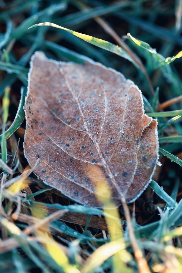 Eerste vorst: een de herfstblad in rijp op gras royalty-vrije stock fotografie