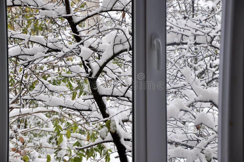 Eerste witte sneeuw op groene bladeren stock foto