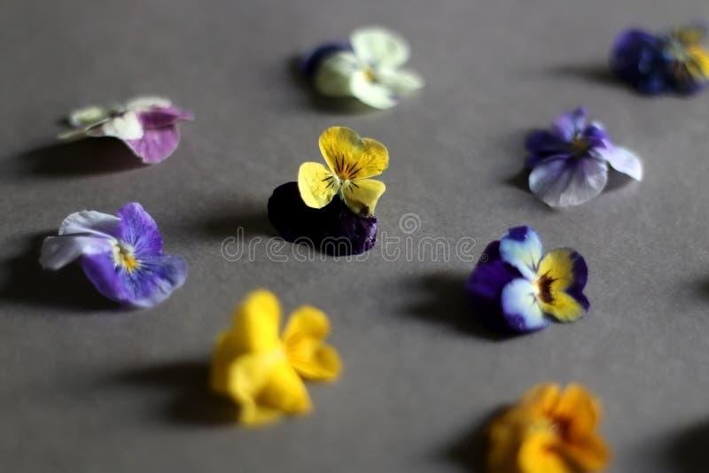 Eetbare Bloemen stock fotografie