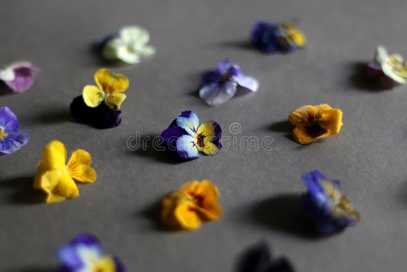 Eetbare Bloemen stock foto