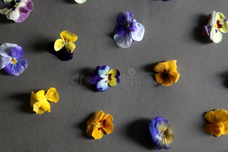 Eetbare Bloemen stock afbeelding