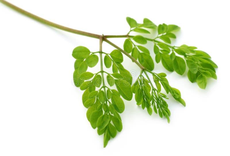 Eetbare moringa bladeren stock foto's