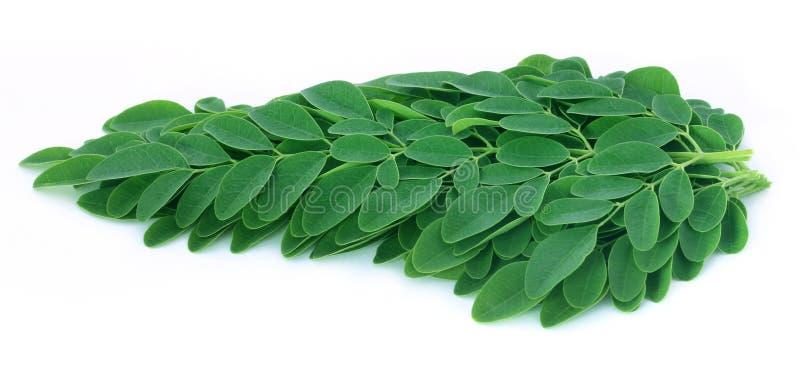 Eetbare moringa bladeren royalty-vrije stock fotografie
