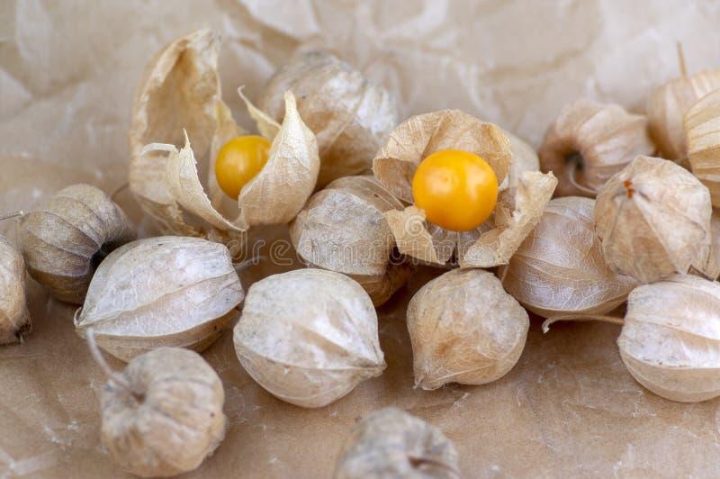 Eetbare smakelijke physalis oranjegele vruchten van Physalisperuviana in droge schillen op gevouwen document stock foto's