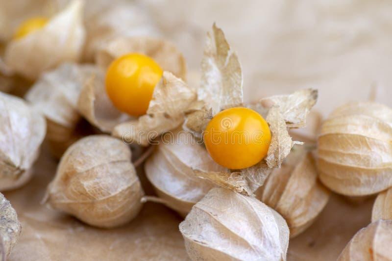 Eetbare smakelijke physalis oranjegele vruchten van Physalisperuviana in droge schillen op gevouwen document royalty-vrije stock foto