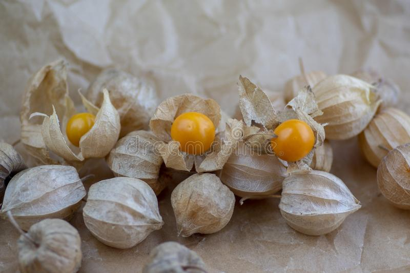 Eetbare smakelijke physalis oranjegele vruchten van Physalisperuviana in droge schillen op gevouwen document stock afbeelding