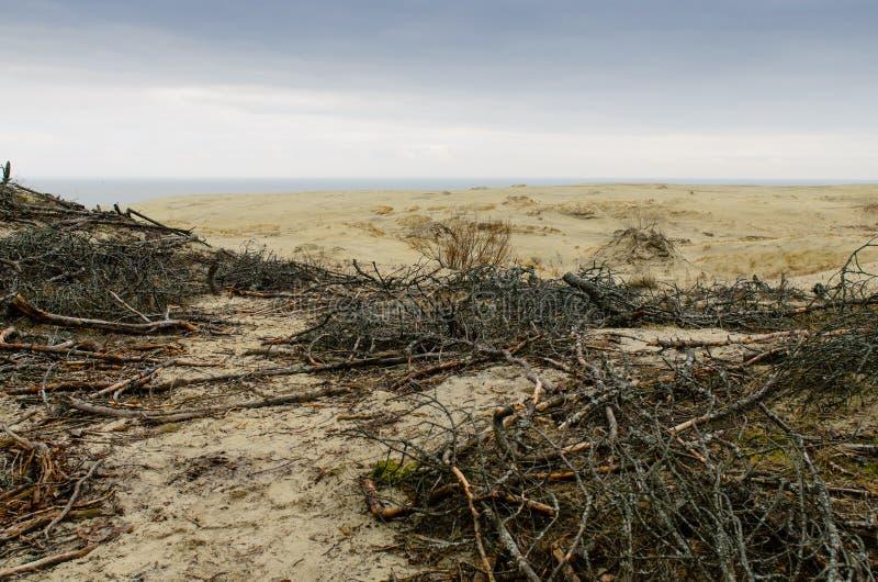 EFA della duna di sabbia fotografia stock