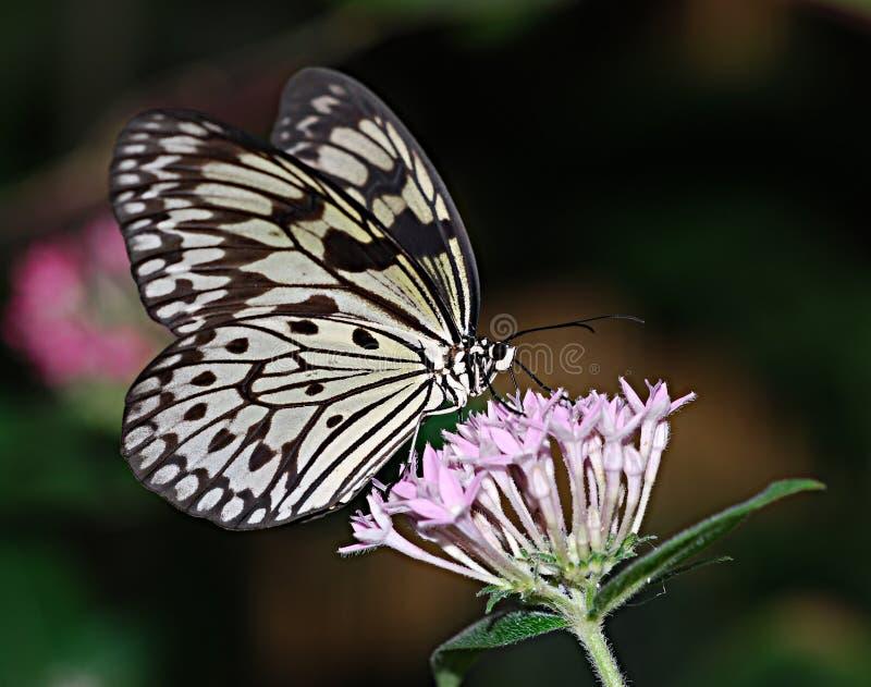 Efecto de mariposa imagenes de archivo