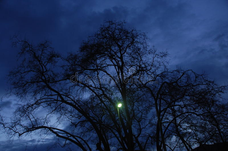 Efecto del horror de la noche tirado de árbol foto de archivo libre de regalías
