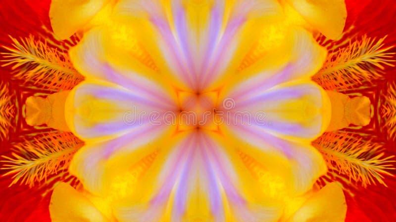 Efecto duplicado de una flor del iris stock de ilustración