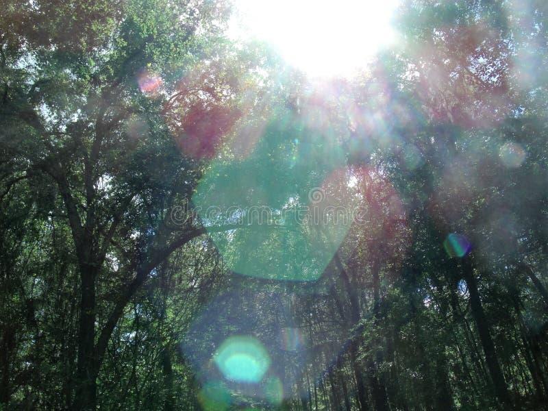 Efecto luminoso del hexágono a través de árboles imagen de archivo
