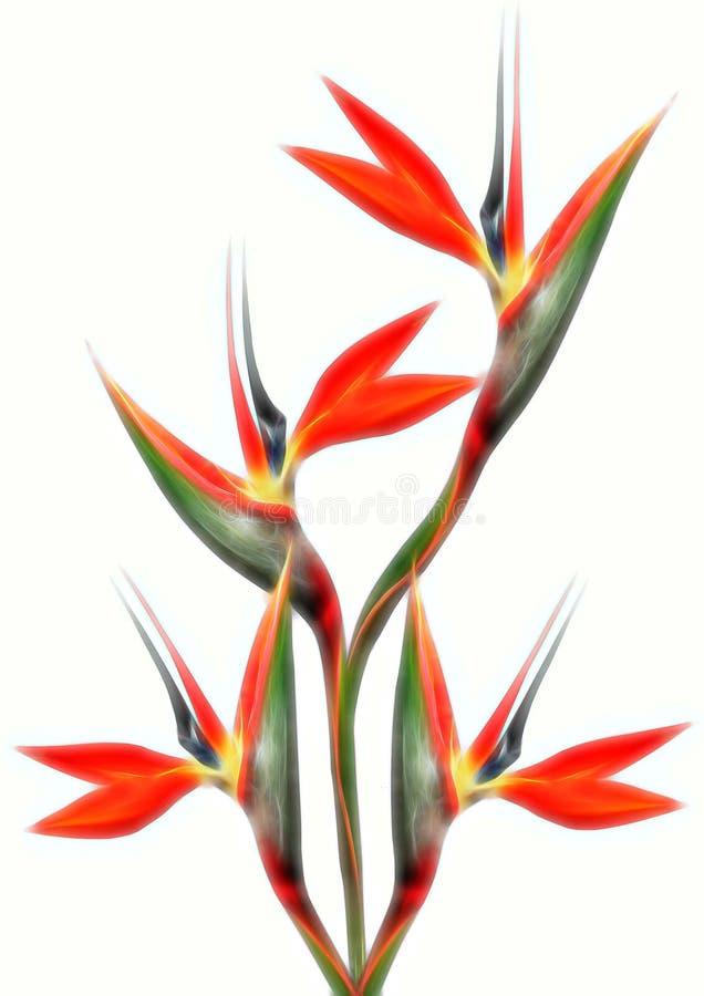 Efecto suave del resplandor del ramo hermoso de la ave del paraíso ilustración del vector