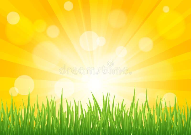 Efeito brilhante do sol do vetor com campo de grama verde ilustração royalty free