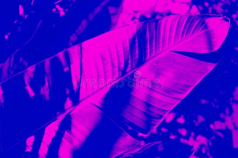 Efeito tropical do duotone da folha Roxo e azul na moda imagens de stock royalty free