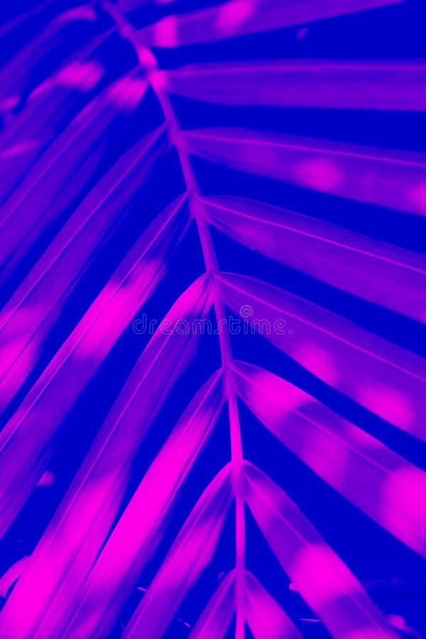 Efeito tropical do duotone da folha vertical fotos de stock