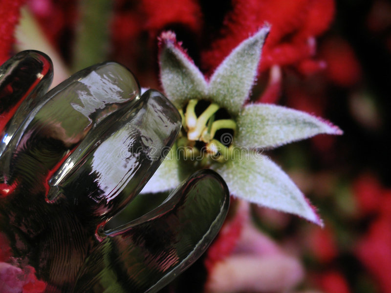 Efeitos especiais da flor macia de vidro da mão imagens de stock