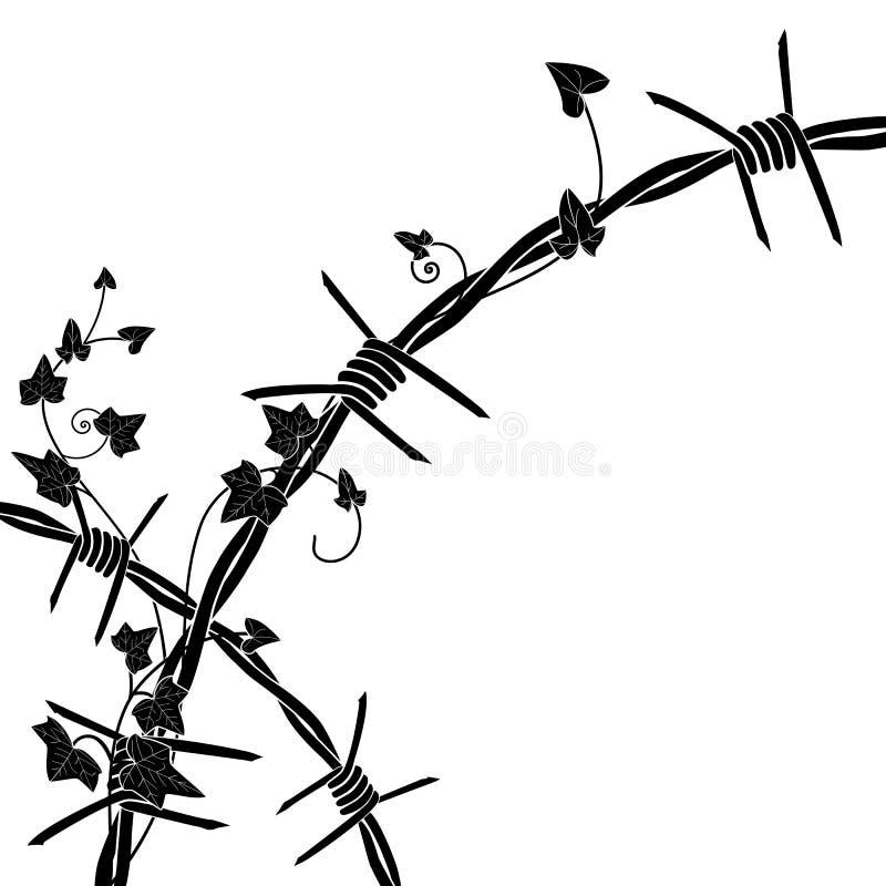 Efeu mit Stacheldraht vektor abbildung. Illustration von draht ...