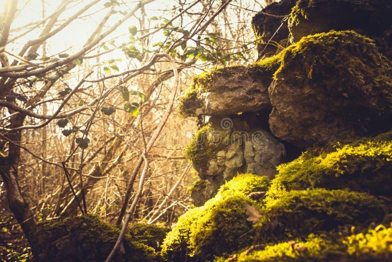 Efeu- und Moosbedeckungstrockenmauer lizenzfreies stockbild