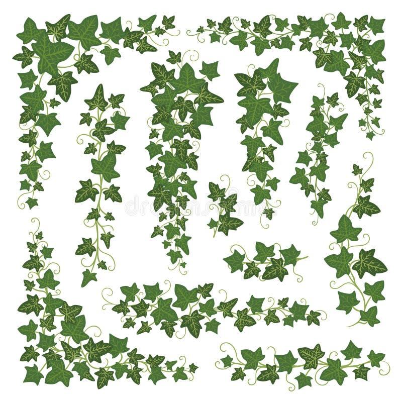 Efeu verzweigt sich Grünsatz stock abbildung