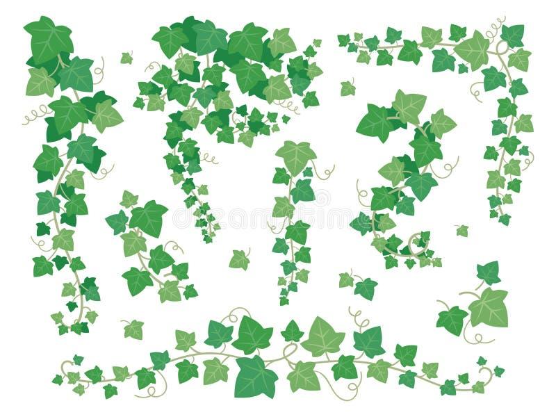 Efeugrünblätter Hängende Kriechpflanzenbetriebsniederlassungen Traubenblatt, das auf dem Gartenwand-Vektorsatz lokalisiert auf We stock abbildung