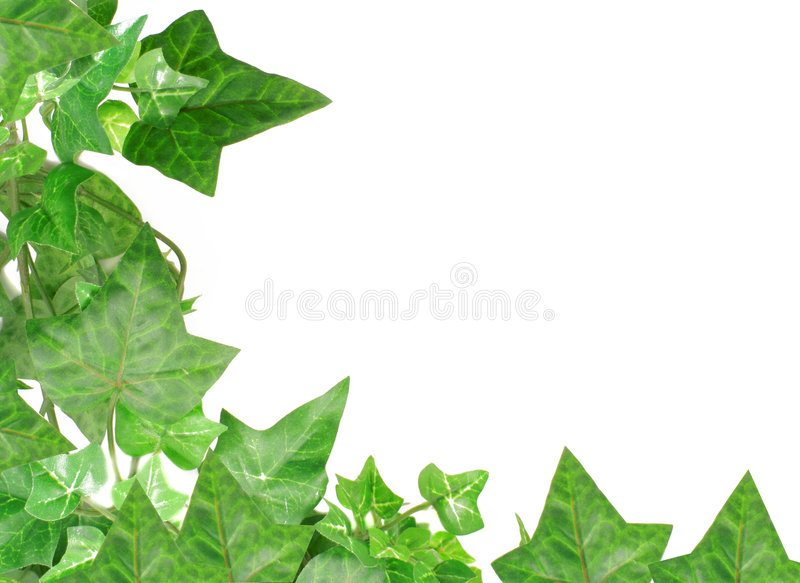 Efeurand stockfoto