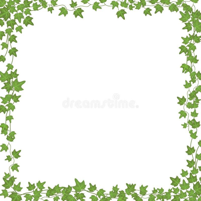 Efeureben mit grünen Blättern Rechteckiger Rahmen des Blumenvektors lokalisiert auf weißem Hintergrund vektor abbildung