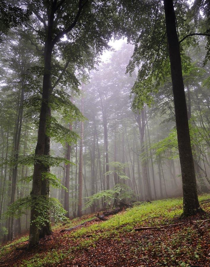 Effacement de forêt photo stock
