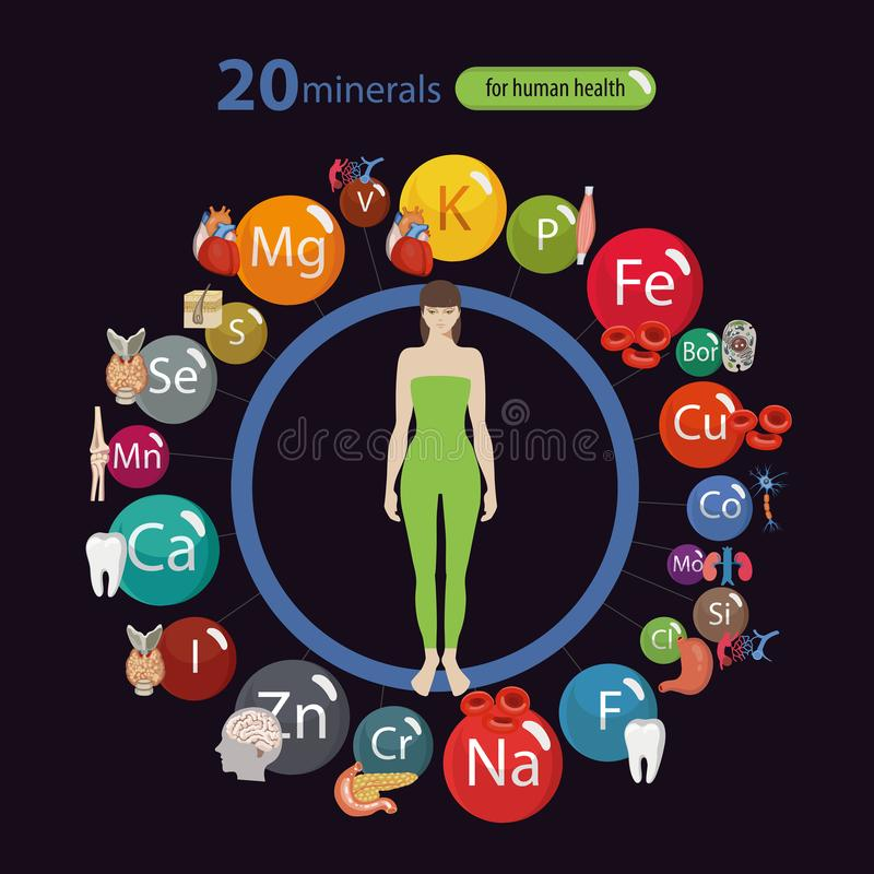 Effect of minerals on the health. 20 minerals: micro elements and macro elements and their effect on the health of the organs of the human body. Fundamentals of stock illustration