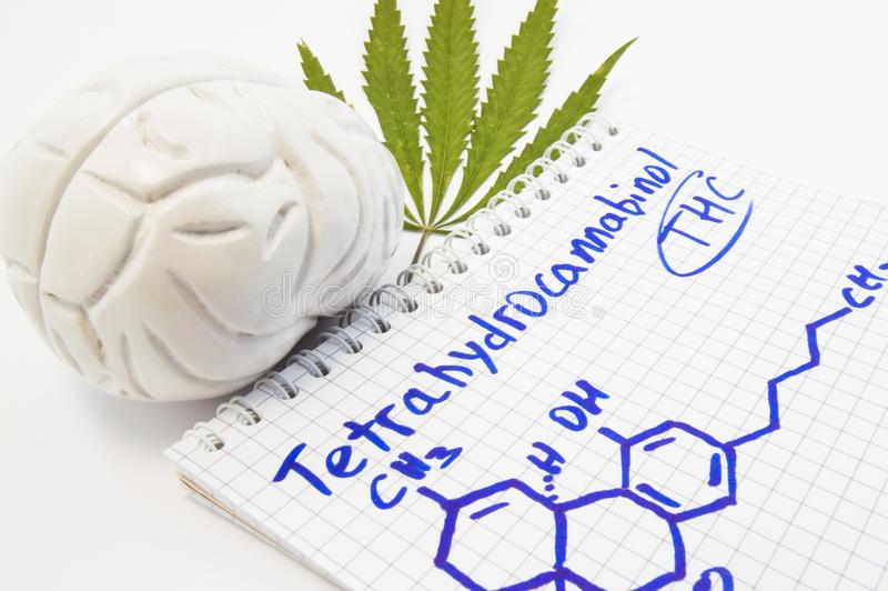 Effects and action of tetrahydrocannabinol THC on human brain. Anatomical model of brain is near leaf of hemp and notepad inscri. Bed with title stock photography