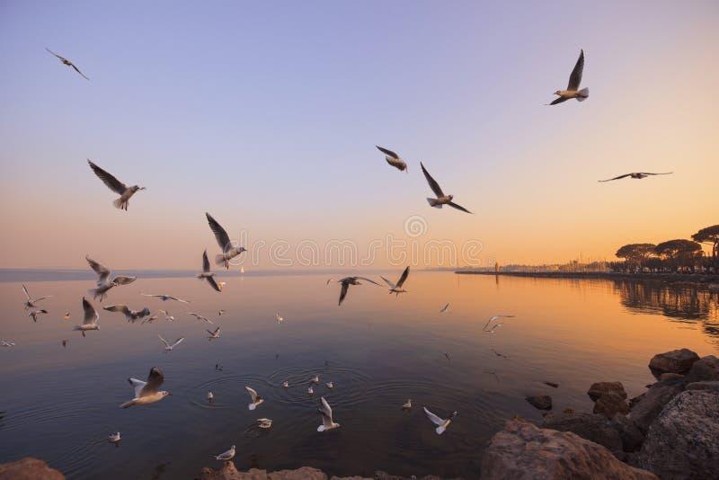 Effectuez le vol photographie stock libre de droits