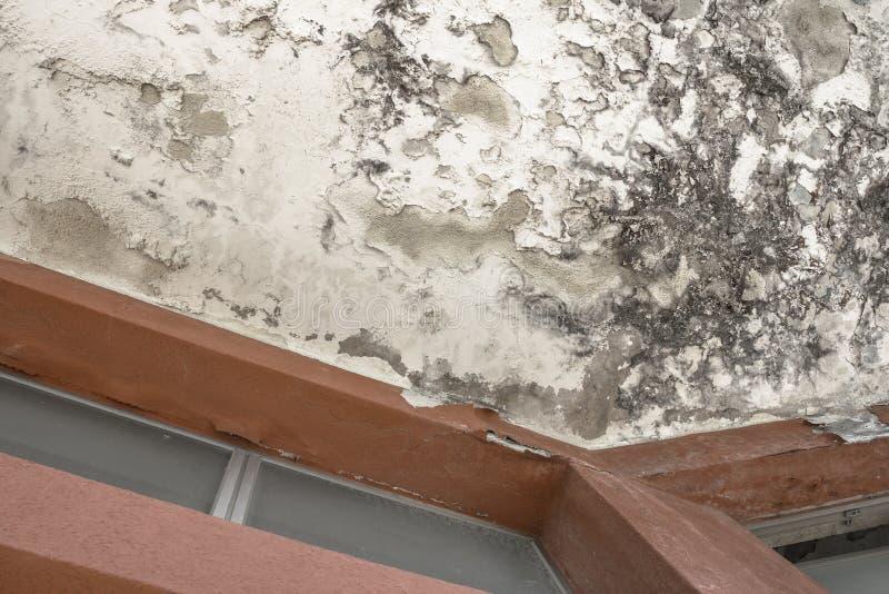 Effekt av fuktighet på en gammal vägg fotografering för bildbyråer