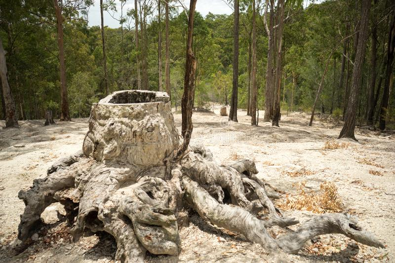 Effekte der Abholzung lizenzfreies stockbild