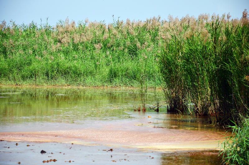 Effekte umweltsmäßig von den Chemikalien und von den Schwermetallen im Boden lizenzfreie stockbilder