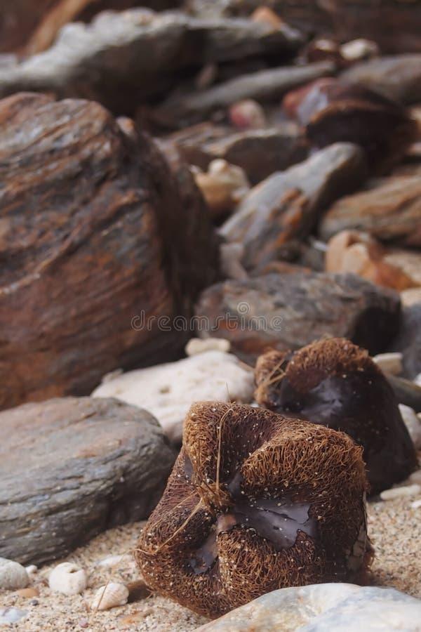 Effekten av bruna träd på stranden arkivbilder