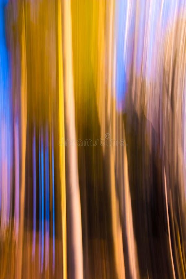 Effet de forêt de tache floue de mouvement photographie stock