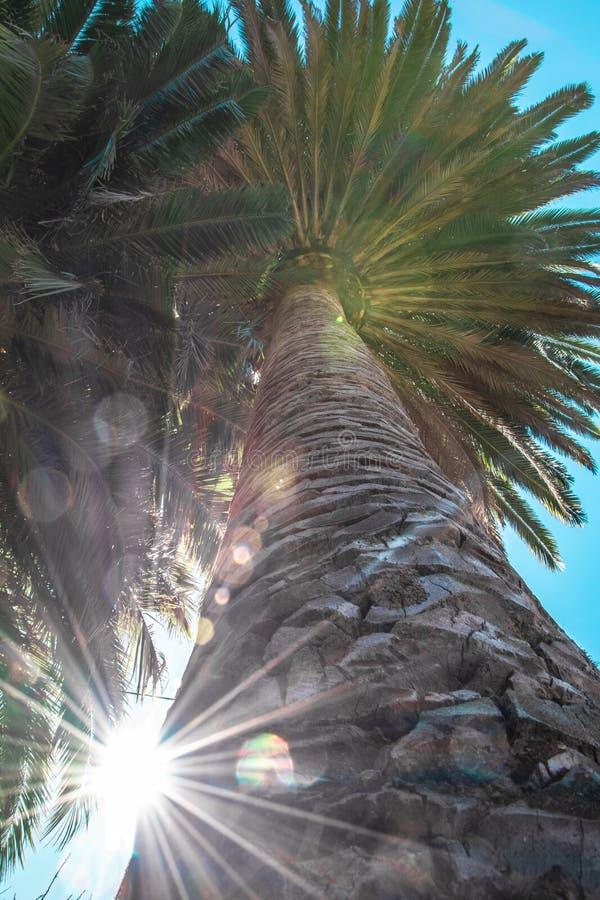 Effet de fusée de Sun entre les palmiers image libre de droits