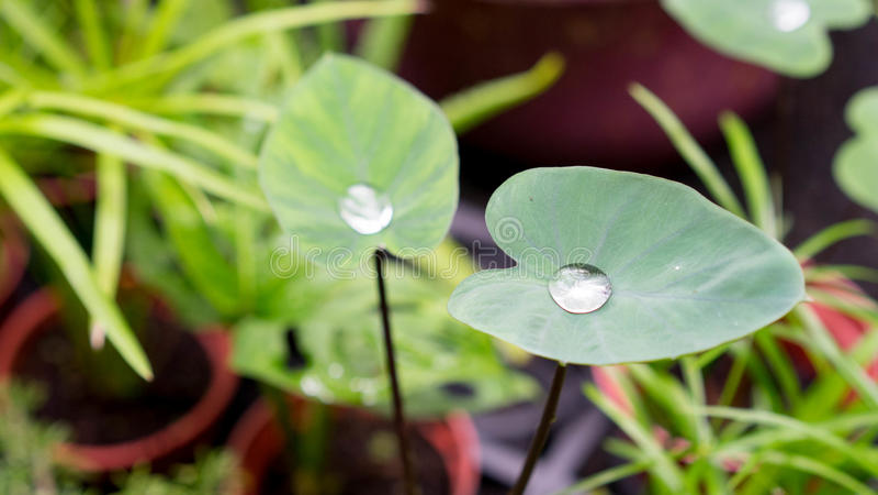 Effet de Lotus photo libre de droits