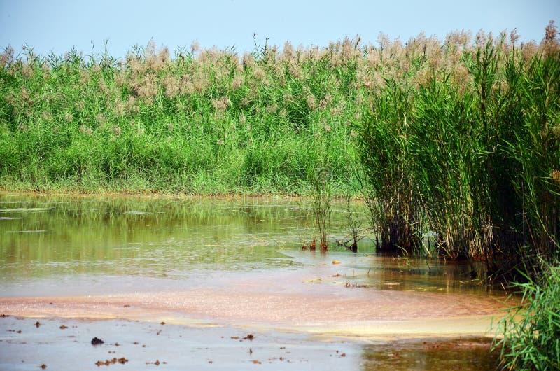 Effets de l'environnement des produits chimiques et des métaux lourds dans le sol images libres de droits