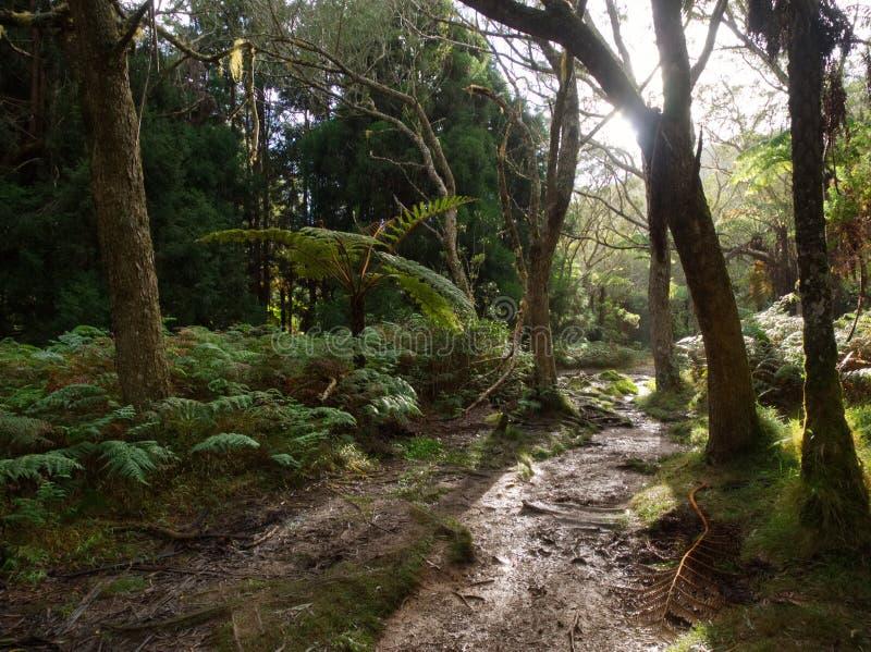 Effets de la lumière sur le sentier piéton dans la forêt principale sur l'île tropicale photo stock