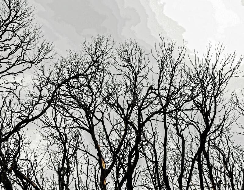 Effets du feu dans une forêt photos libres de droits