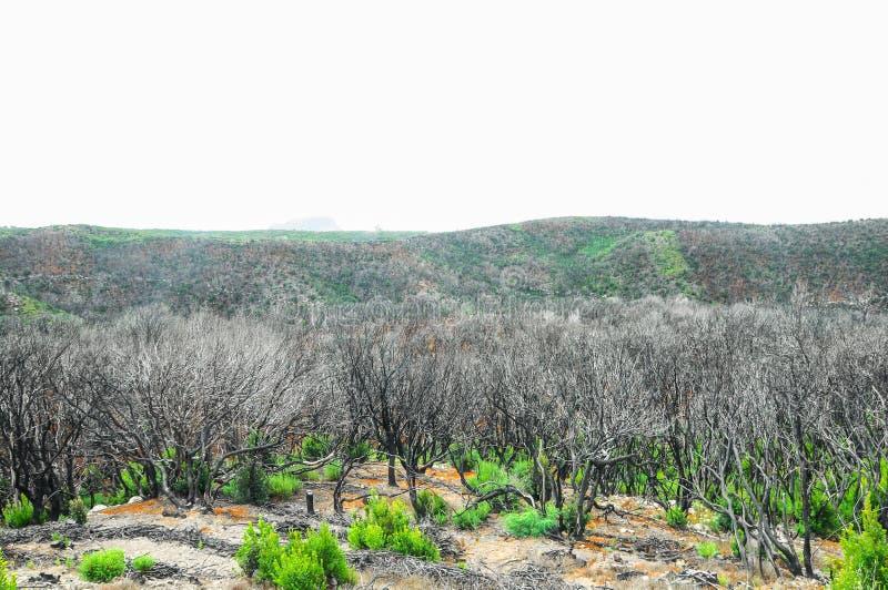 Effets du feu dans une forêt image libre de droits