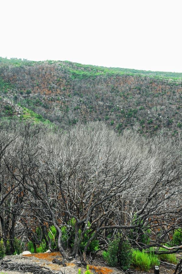 Effets du feu dans une forêt photo stock