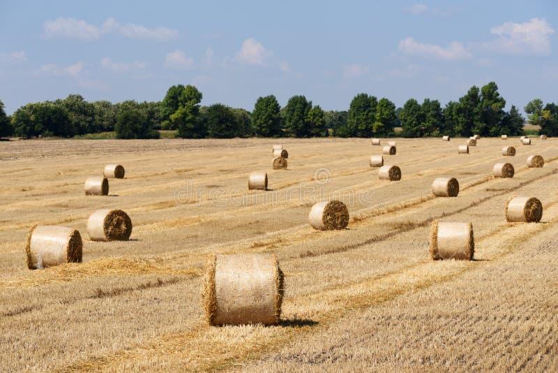 Effettuare i raccolti del grano fotografia stock libera da diritti