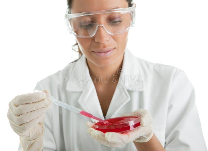 Effettuare prova in laboratorio immagine stock