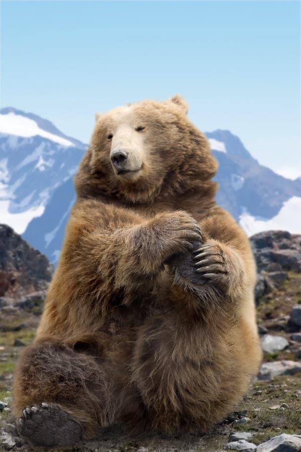 Effettuazione dell'orso di Kodiak fotografia stock