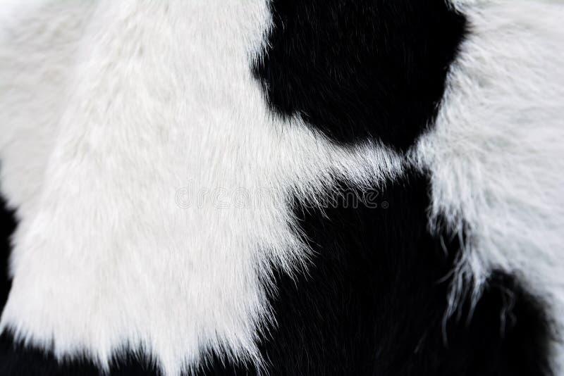 Effrayez la fourrure (peau) noire et blanche, fond images stock