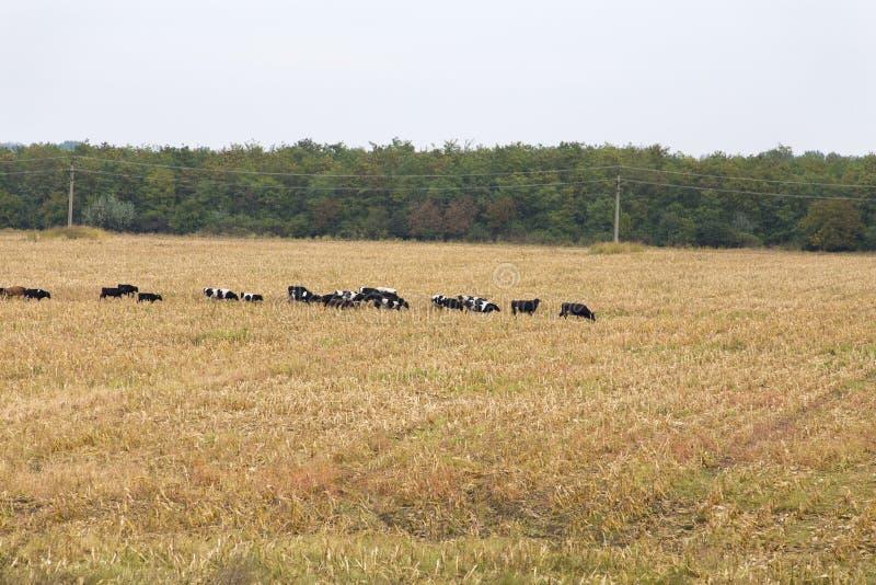 Effrayez le ` s sur un champ d'agriculture d'une ferme photo libre de droits