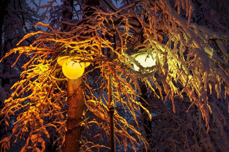 Efter ett tungt snöfall parkerar den sagolika skönheten av den gamla morgonvintern i Europa, Ukraina bland de härliga vita ekarna arkivfoto